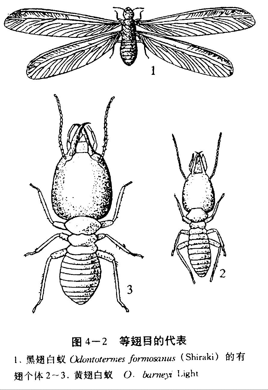 昆虫世界 手绘画